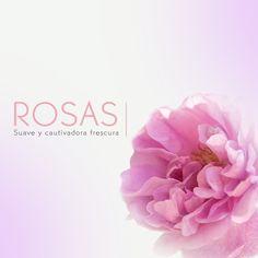 Disfruta de los beneficios de las Rosas, que suavizan, regeneran y nutren tu piel.
