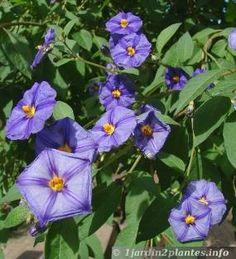 Fleurs de l'arbre aux gentianes