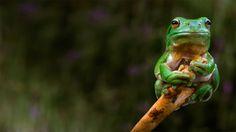 Bing Frog Wallpaper | 219 views Bing Image: 2014-06-06