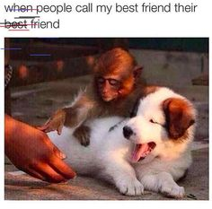 fall memes Funny friends memes to celebrate the friends in our lives. Make sure to share them with your besties to let them know how much you love them. Friendship Day 2017, International Friendship Day, Friendship Memes, Best Friendship, When Your Best Friend, Love You Friend, Big Bird Meme, Best Friend Quotes Funny, Funny Friends