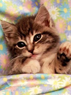 Cute Kitten Image Puzzle #kitten #aboutcat - Know more about cats at Catsincare.com!