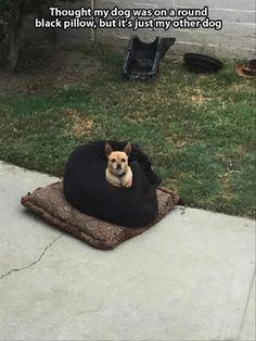 dog-bed.jpg (JPEG 画像, 750x1000 px) - 表示倍率 (70%)