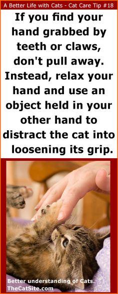 Cat Care Tips... Understanding cat behavior is key for responsible cat care.