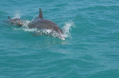Dolphins in Destin