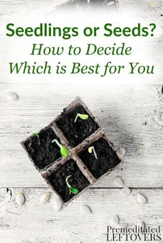 Before you start planting, look at the benefits of both seedlings and seeds, so you can decide which one is best for you, your life, and your gardening goals! DIY garden project idea