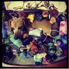 This is what we love to see. Can you spot the dog amongst the huge collection of Envirosax?