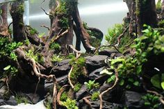 10 Tips on Designing a Freshwater Nature Aquarium Nano Aquarium, Nature Aquarium, Aquarium Design, Aquarium Fish, Aquarium Aquascape, Aquarium Ideas, Aquascaping, Cool Tanks, Awesome Tanks