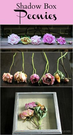 Shadow Box Peonies - A Great Way to Preserve Your Garden Flowers This fun and simple craft can be easily made with any dried flower. Here we created one with shadow box peonies and a burlap backing. Flower Shadow Box, Diy Shadow Box, Flower Boxes, Nature Crafts, Home Crafts, Easy Crafts, Diy And Crafts, Drying Roses, How To Preserve Flowers