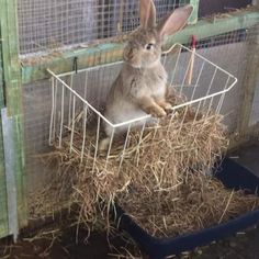 Animal care | Dog care | Dog Training | Cat Care | Cat Products | Rabbit care | guinea Pig care | Guinea pig cages | Rabbit care | Sheep care | Chicken Care | Duck care | Poultry cages | Duck Cages | Animal health |