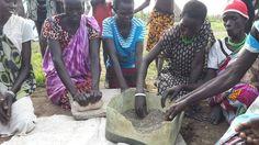 South Sudan food crisis: Surviving on water lilies: Women grind the seeds of lilies in Reke village, South Sudan (September 2014)