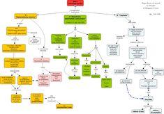 mappa concettuale realizzata con cmap che spiega il materialismo storico, il manifesto del partito comunista e il Capitale.