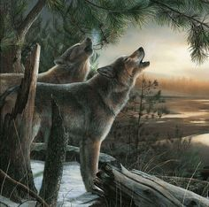 a5ae8a7452452 loup dans la foret Wolf Love