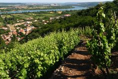 rhone valley wine: chateauneuf du pape