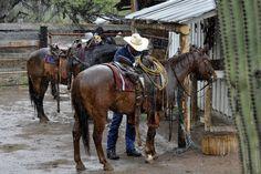 Cowboy Up : Photo