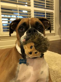 Just a dog and his hedgehog