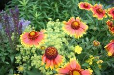 Plants for Sandy Soils -- http://www.therealgardener.com/blog/plants/drought-tolerant-heroes-plants-for-sandy-soils
