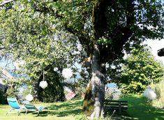 #Dekoration Pom Pons #Kleinsasserhof Pom Pon, Plants, Getting Married, Wedding, Dekoration, Plant, Planets