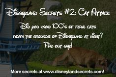 If you do not like cats, you won't like this secret. Especially since it involves of furry felines. Every single night, after the happiest place on earth closes, of feral cats roam the .