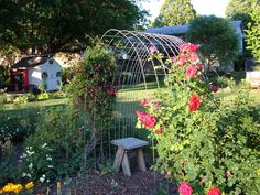hog wire arbor-quick and easy to make.
