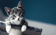Pusicats…the sweetest things :)