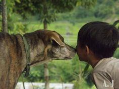 A Dog love.