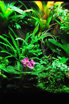 Google Search Dart Frogs, Vivarium, Wet And Dry, Terrariums, Fish, Google Search, Garden, Design, Toad