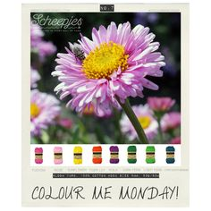 #colourmemonday, brought to you by www.scheepjeswol.com. Each Monday we release a new Inspirational Snapshot to help you plan your knit and crochet projects! No.7 was inspired by our new yarn #Bloom and the beginning of spring. #Scheepjes #Scheepjeswol Paint Color Combos, Yarn Color Combinations, Colour Schemes, Color Patterns, Yarn Inspiration, Color Me Beautiful, Coordinating Colors, Color Of Life, Color Pallets