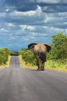 How cool would it be to see an elephant walking down the road?