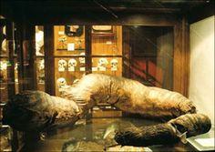 Lo Que Hay En Este Museo Es PEOR Que Una Película De Terror.