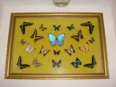 Antique Rare Butterflies In Custom Case