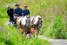 Equirencontre Bertrix 2016 – Fédération Francophone d'Equitation asbl - Equirencontre Riding Helmets, Horses, Hats, Animals, Animales, Hat, Animaux, Animal, Animais