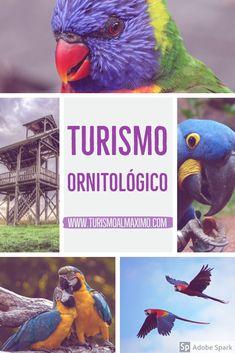 Turismo Ornitológico tiene como principal objetivo la observación y contemplación de aves, en su habita natural. #turismoalmaximo #aves #viajes #travels #turismo #viajes #viajando  #ornologico #aves #vacaciones #blogdeviajes #recorriendoalmundo