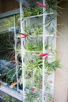 Tillandsia update in our garden - The Horticult