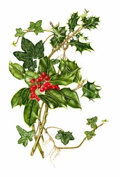 Holly & Ivy Greetings card