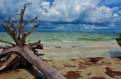 Sanibel Island (Lighthouse Beach)