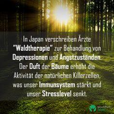 """In Japan verschreiben Ärzte """"Waldtherapie"""" zur Behandlung von Depressionen und Angstzuständen. Der Duft der Bäume erhöht die Aktivität der natürlichen Killerzellen, was unser Immunsystem stärkt und unser Stresslevel senkt. Stress, Japan, Immune System, Medicine, Psychological Stress, Japanese"""
