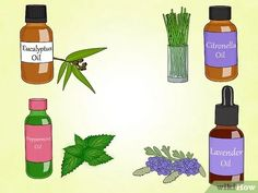 Image intitulée Make Natural Outdoor Fly Repellent with Essential Oils Step 2