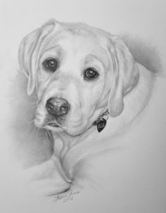 How to draw a labrador puppy step by step wildlife art and pet portraits by canadian nature - Dessin labrador ...
