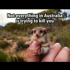 YES IT IS! THIS ONE IS TRYING TO KILL YOU WITH CUTE!