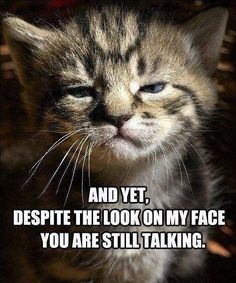 Funny Animals With Captions, Funny Animal Quotes, Animal Jokes, Funny Animal Pictures, Cute Funny Animals, Cute Baby Animals, Funny Cute, Cute Cats, Baby Pictures
