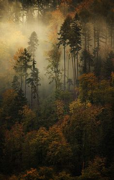 Ghostly Memories by alexandredeschaumes alexandre deschaumes autumn ethereal fog forest ghostly mist Ghostly Memories alexandredeschaumes All Nature, Amazing Nature, Nature Source, Autumn Nature, Beauty Of Nature, Pics Of Nature, Flowers Nature, Flowers Garden, Alexandre Deschaumes