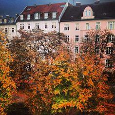 Der Herbst vom Fenster aus