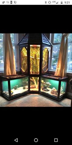Reptile Habitat, Reptile Room, Reptile Cage, Reptile Enclosure, Reptile Store, Reptile Tanks, Les Reptiles, Cute Reptiles, Reptiles And Amphibians