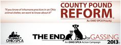 End the gassing of dogs and cats in Ohio county shelters.