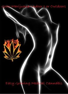 #GrowingMarijuana......Where's the sauce?  The sauce is in Marijuana seeds, as it seeds grow so does the sauce -:)   More about how to safely purchase marijuana seeds look on further.  Enjoy the sauce!  #cannabis #canabis #marijuana #marajuana #weed #autoflowering #medicalcannabis #medicalmarijuana #sandspublishing