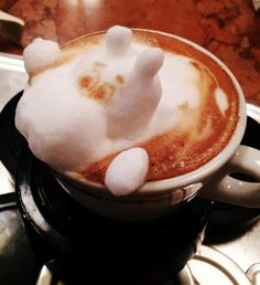 The rabbit, hippo and giraffe emerging from the coffee cups are the astonishing work of a barista in a Japanese cafe. Japanese latte artist Kazuki Yamamoto has taken coffee art to a higher level. Best Kona Coffee, I Love Coffee, Coffee Break, Barista, Chocolates, Coffee Latte Art, Coffee Coffee, Cappuccino Machine, Cappuccino Art