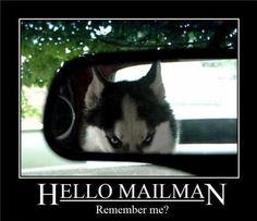 Some Husky memes.