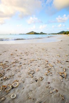 Seashell beach in Antigua and Barbuda, Caribbean
