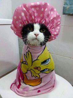 Gatinho no banho