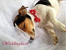 Chlpatý družba I. Wedding Decorations, Wedding Ideas, Rustic Wedding, Dogs, Cute, Handmade, Animals, Vintage, Animales